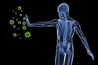 тимус против болезней