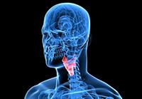 Дисфункция щитовидки - диагностика
