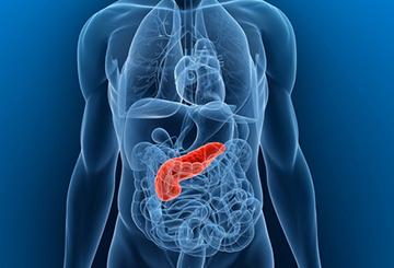 Эндокринная функция органа