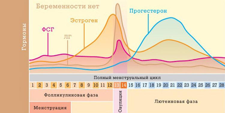 Уровень половых гормонов у женщин