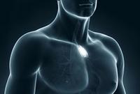 анатомия тимуса