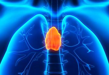 вилочковая железа формирует иммунитет