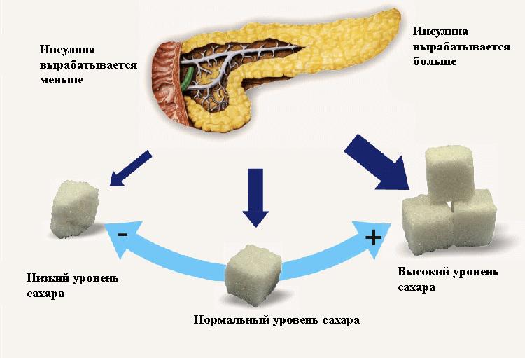 эндокринная функция поджелудочной