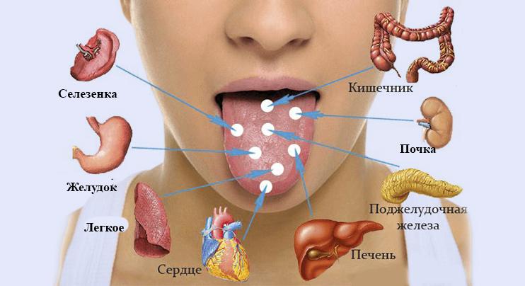 язык и органы