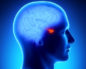гипофиз мозга