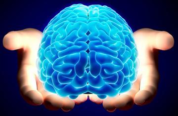 мозг и его влияние на мужчину